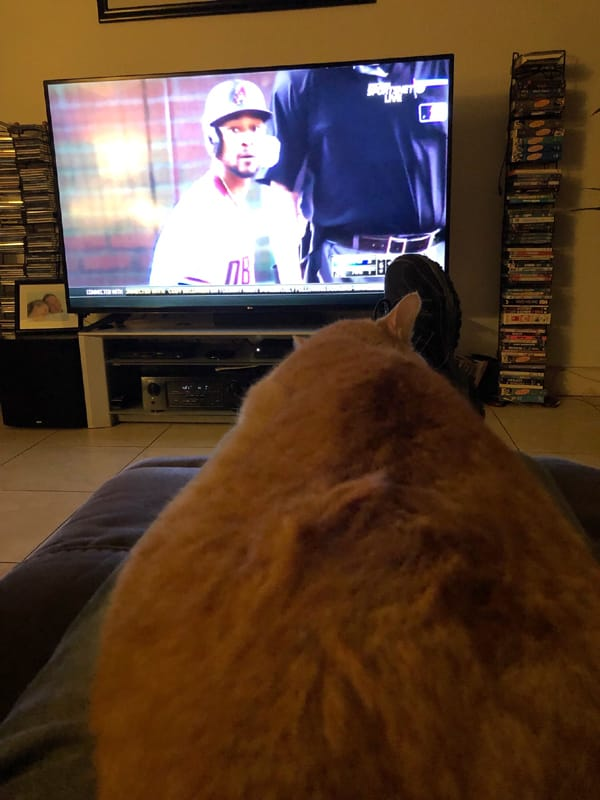 Watching baseball with a cat