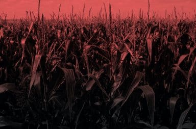uh oh the corn field went evil