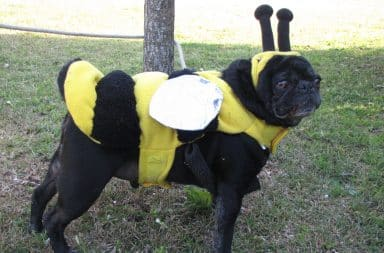 dog in a costume