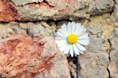 a flower running into a flower