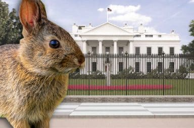 rabbit white house