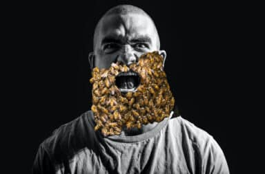 guy with a beard of bees