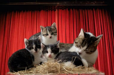 cats on broadway