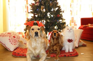 holiday pets