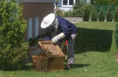 bees bee lady apiarist