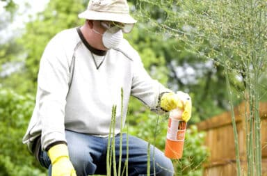 Man fertilizing and applying pesticide spray on plants in his garden