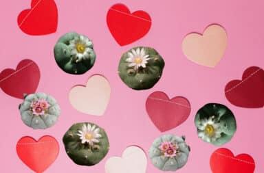 Valentine's Day hearts with peyote plants