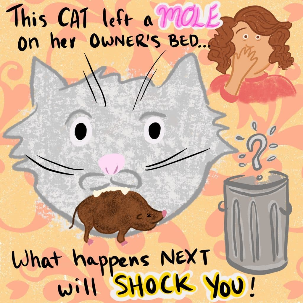 This cat left a mole on her owner's bed... what happens next will SHOCK you! Image shows cat with a mole in their mouth, with a disgusted owner standing near a trash can with a giant question mark over it.