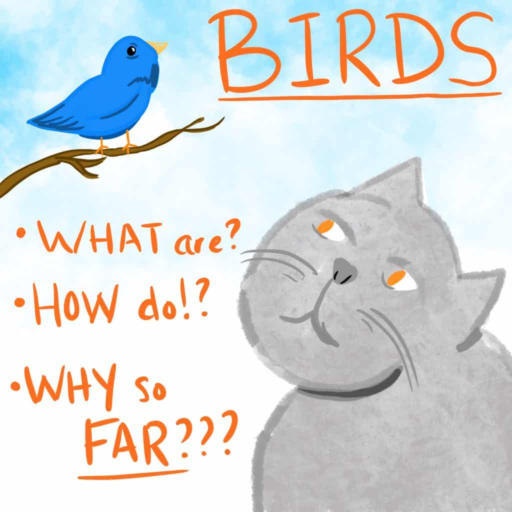 BIRDS! What are? How do? Why so FAR??? [A grey kitty pensively looking up at a bluebird in a tree.]