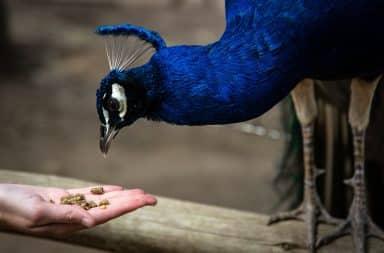 Bird feeding from hand