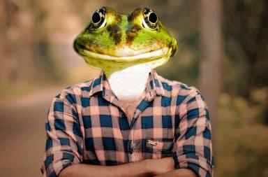 frog guy