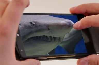shark on the phone