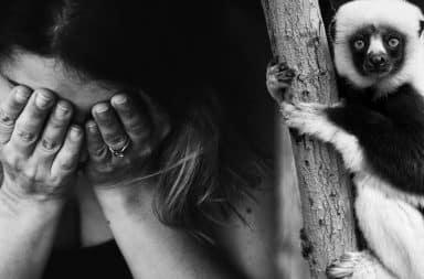 sad about a lemur