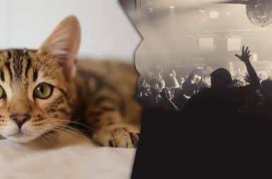 cat vs big party