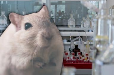 mouse in a lab